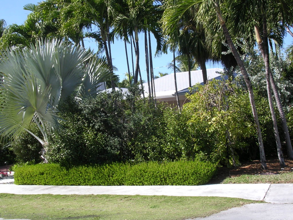 Landscaping with florida native plants blog archive for Beach house landscaping plants